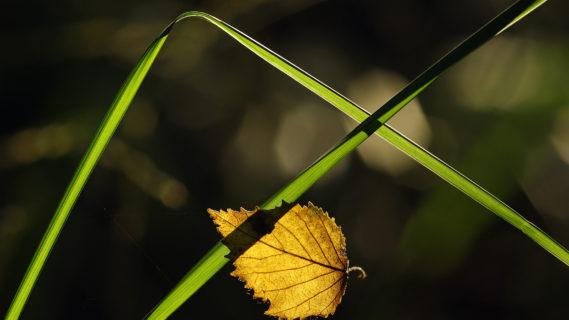 Natur und Fotokunst