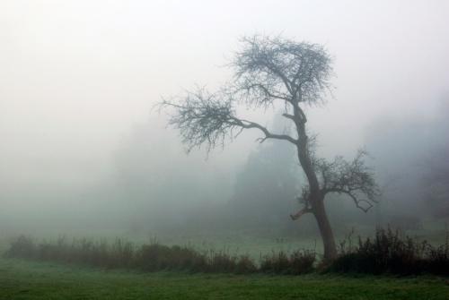 nsberg im nebel 029 kopie 2  passig gemacht